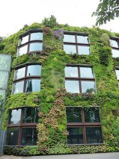 Mur végétal de Patrick Blanc au Musée du Quai Branly, Paris 7e (75), 10 juin 2012, photo Alain Delavie