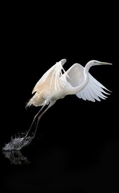 The Miracle of Life Pretty Birds, Beautiful Birds, Animals Beautiful, Nature Animals, Animals And Pets, Cute Animals, Exotic Birds, Colorful Birds, Wildlife Photography