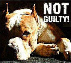 """Why does the media treat pit bulls like criminals?    Why not show the responsible pit bull owners for once?    Click """"like"""" and """"Repin"""" to spread the word"""