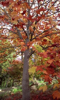 Autumn in Central Hawkes Bay Trees, Autumn, Plants, Beautiful, Fall, Tree Structure, Flora, Plant