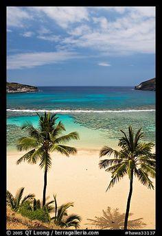 Palm trees and beach with no people, Hanauma Bay. Oahu island, Hawaii, USA (color)