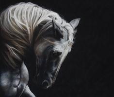 prancing horse, Pastel-drawings by Julie Olsen