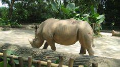 Singapore Zoo, Time Travel, Safari, Elephant, River, Night, Animals, Animales, Animaux