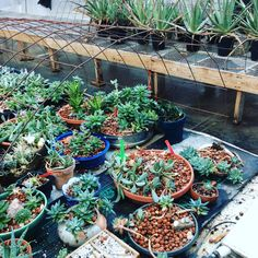 our succulent space on milewidenursery