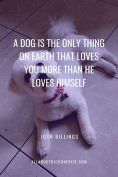 Our dogs are our best friends in the world without a doubt. Show your love and appreciation for these adorable doggos with these 21 inspiring dog quotes. That's Love, Love Him, John Grogan, Great Quotes, Inspirational Quotes, Cesar Millan, Read Later, Little Puppies, Bichon Frise
