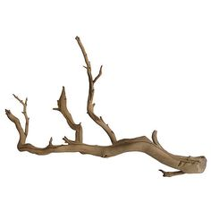 Pre-Owned Preserved Driftwood Branch (125 CAD) ❤ liked on Polyvore featuring home, home decor, decorative accessories, tan, driftwood home decor and branches home decor