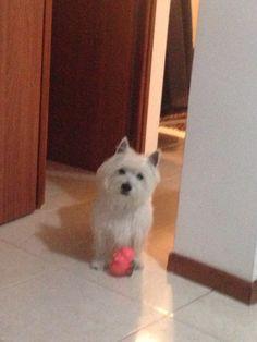 Quiero jugar!!