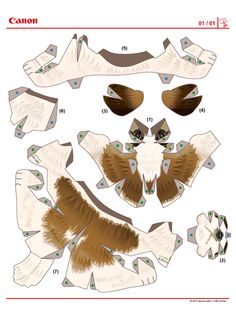 Image detail for -672 chien paper toy template Chien Shih Tzu