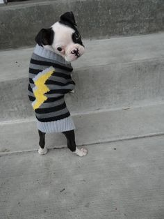 Puppy in knitted sweater... Sweet!