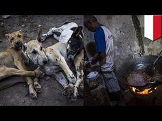 Konsumsi daging anjing meningkat di Indonesia - TomoNews - YouTube