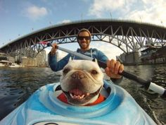 GoPro Photo of the Day! Love the gopro! Funny Dogs, Funny Animals, Cute Animals, I Love Dogs, Puppy Love, Happy Dogs, Happy Puppy, Mans Best Friend, Dog Life