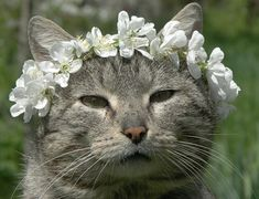 Was'nt around to wish you all a Happy Caturday yesterday, so here's a Happy Belated Spring Caturday!