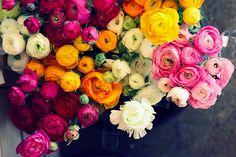 beautiful flower photography by jessica nichols
