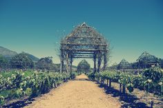 Babylonstoren Wine Estate houses a secret-garden style paradise just 60 kms outside of Cape Town.  Read more about it at:  http://chalkandcheesetheblog.com/2015/03/25/take-me-outside-sit-in-a-green-garden/