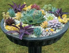 Transform an ornate bird bath into a dramatic display of striking succulents.