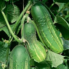 How to Save Seeds for Next Season: Organic Gardening