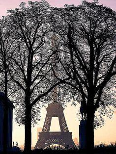 Trees & Tour Eiffel