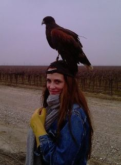 The Art of Living: Falconry
