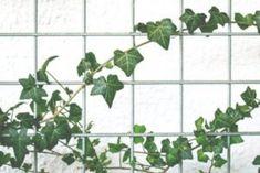 Jak na hluboký spánek? Pořiďte si do ložnice jednu z těchto 5 rostlin Inspire Me Home Decor, Cute Dorm Rooms, Cool Rooms, Farmhouse Design, Rustic Farmhouse, Farmhouse Style, Decoration Inspiration, Decor Ideas, Home Decoration