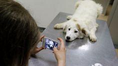 Ana-Maria Ciuclu zeigt, dass das Streuner-Problem in Bukarest anders gelöst werden kann. Sie zieht durch ihr Viertel, um die herrenlosen Vierbeiner einzusammeln.Sie sucht ein temporäres zu Hause, bringt sie zum Tierarzt, kümmert sich um Impfungen und Hundemarken. Sie macht Fotos und stellt diese auf ihre HundeAdoptionsZentrum-Facebook-Seite . Hundeliebhaber aus ganz Europa melden sich, die den Tieren ein neues Zuhause geben wollen. Ana-Maria konnte 150 Streunern das Leben retten. RTR
