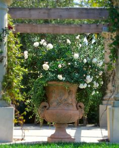 How to grow Roses in a container. by Margie Grace - Grace Design Associates