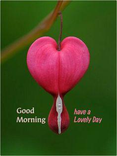 Dobro jutro, prijatelji!