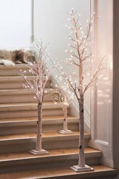 Birch Light Trees - Available in 3 Sizes