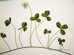 Картинки по запросу клевер цветок рисунок  книга