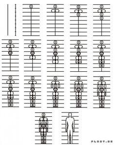 Пропорции человеческого тела (упрощенная версия)