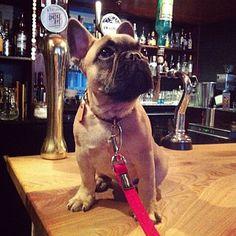 Wee dug on the bar alert! Pic from the Last Word Saloon, #pubdog #dugsNpubs #dugsinpubs #dugswelcome #pubdogs #pubdug #dogfriendly #dogsofinstagram #stockbridgeedinburgh #stockbridge #edinburgh #scotland