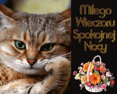 Wierszyki i gify na dobranoc: Gify na dobranoc kotki Memes, Cats, Movie Posters, Nova, Dog Love, Gatos, Film Poster, Popcorn Posters, Kitty