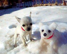 Awww.... too cute... twins...