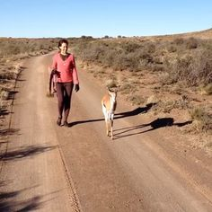 Late afternoon stroll at BloemhofKaroo with Leyla 4 years ago - I loved her so much, remember so vividly how she used to blow on my cheek; a Springbok version of an Eskimo kiss. #Springbok #afternoonstroll #BloemhofKaroo #eskimokisses #Leyla #Richmond #booktownrichmond #lovethekaroo