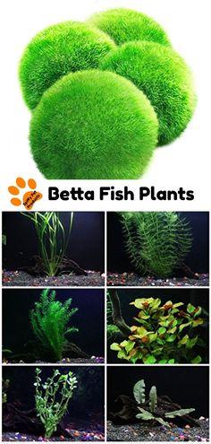 110 best fishkeeping images pet supplies betta fish toys pet fish