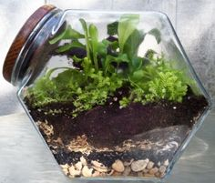 One of the terrariums my mom and I made a couple weeks ago. This one is in a vintage cookie jar. Tutorial posted at http://lawschooltransplant.com/project-terrarium/.