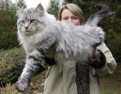 If I had a cat like this I would name it something from skyrim . After a khajiit . Because that's what it looks like