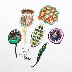June #cbdrawaday challenge with @augustwren and @creativebug  30 Things to Paint with Augustwren.  Day 27 // Seed Pods