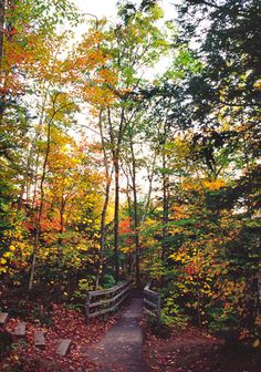 walking trail in the New Hampshire White Mountains