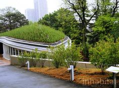 A gorgeous green roof grows in Brooklyn
