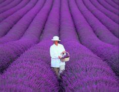 Lavender like whoa.