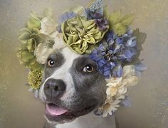 """After the success of her """"Wet Dog"""" series, Gamand is focusing on adoption issues with her """"Flower Power: Pit Bulls of the Revolution"""" series. Mash Unit, I Love Dogs, Cute Dogs, Homeless Dogs, Photo Projects, Dogs Of The World, Pit Bulls, Animal Photography, Photography Series"""