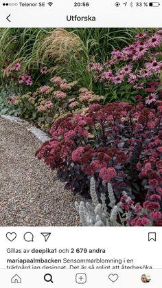 Dry Garden, Autumn Garden, Garden Plants, Back Gardens, Outdoor Gardens, Landscape Design, Garden Design, Prairie Planting, Natural Garden