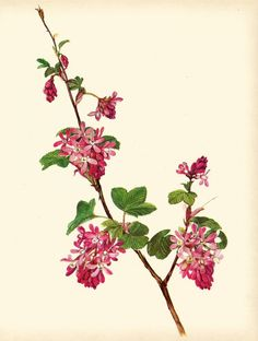 Use coupon code PINTEREST to save 10% off of your purchase! Gorgeous VINTAGE ORNAMENTAL SHRUB Art Print by UpcycleFarmer