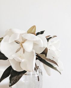Lovely white magnolia, white an fresh green color inspiration. Flower Aesthetic, White Aesthetic, Cactus Y Suculentas, Magnolias, My Flower, Planting Flowers, Floral Arrangements, Beautiful Flowers, White Flowers