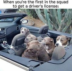 When you're the first in the squad to get a driver's license