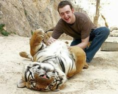 Even tigers love having their bellies scratched every once in a while!