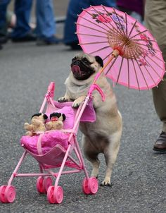 It was such a lovely day, Lola took the babies out for walk. Good girl, Lola, yes, you are...  ~~  Houston Foodlovers