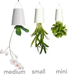 Sky Planter- for an herb garden that doesn't take up counter space!