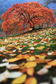 Ready for #Autumn:  Japanese Garden, Portland, OregonAaron Reed