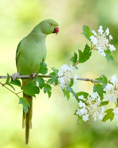 Wild Life, Cute Animal Videos, Colorful Birds, Parakeet, Memes, Disney, Parrot, Beautiful Flowers, Cute Animals